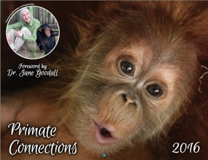 Primate Connections cover